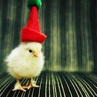 It's Christmas!!